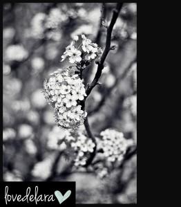 blog_spring